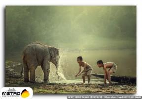 hayvanlar 00075