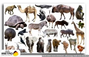 hayvanlar 00077