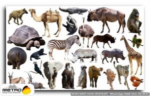hayvanlar 00078