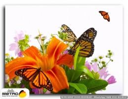 kelebekler 00009