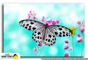 kelebekler 00016