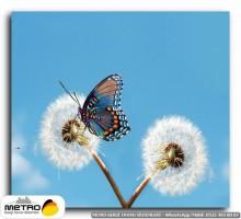 kelebekler 00019