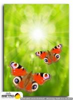 kelebekler 00037