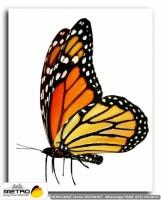 kelebekler 00054