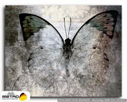 kelebekler 00062