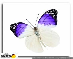 kelebekler 00081