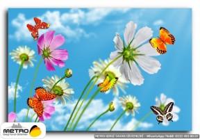 kelebekler 00082