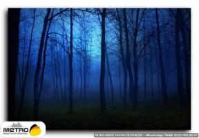orman agac yol 00022