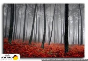 orman agac yol 00023