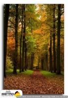 orman agac yol 00028