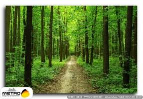 orman agac yol 00030