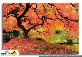 orman agac yol 00041