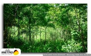 orman agac yol 00042