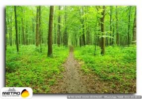 orman agac yol 00050