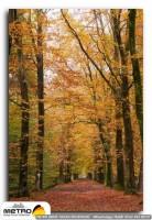 orman agac yol 00056