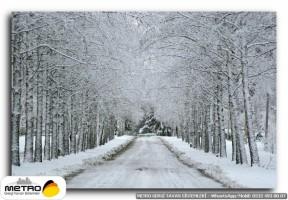 orman agac yol 00058
