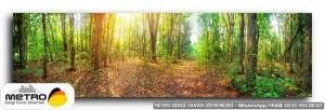 orman agac yol 00061