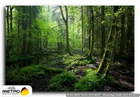 orman agac yol 00063