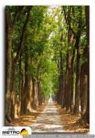orman agac yol 00075
