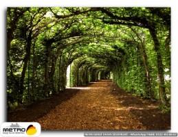 orman agac yol 00076