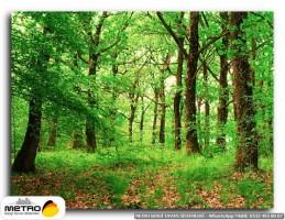 orman agac yol 00092