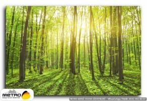 orman agac yol 00105