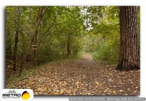 orman agac yol 00119