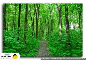 orman agac yol 00130
