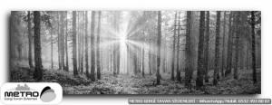 orman agac yol 00133