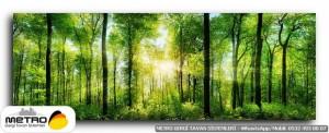 orman agac yol 00141