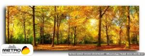 orman agac yol 00145