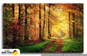 orman agac yol 00146