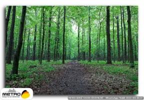 orman agac yol 00150