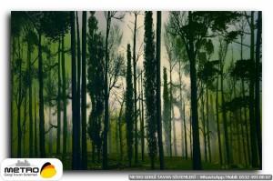 orman agac yol 00151