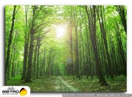 orman agac yol 00154
