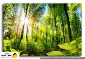 orman agac yol 00155
