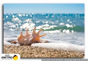 sahil deniz 00087