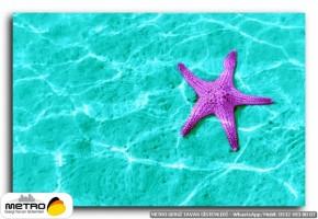 sahil deniz 00116