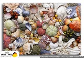 sahil deniz 00136