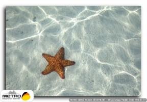 sahil deniz 00151