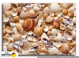 sahil deniz 00231